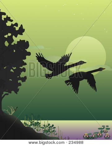 Swan Takeoff L