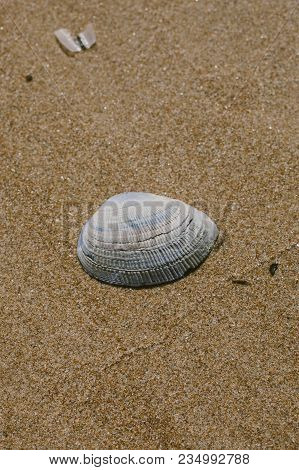 Seashell On Sand Background. Shell On The Beach. Closeup View Of A Seashell Buried In The Sand. Summ