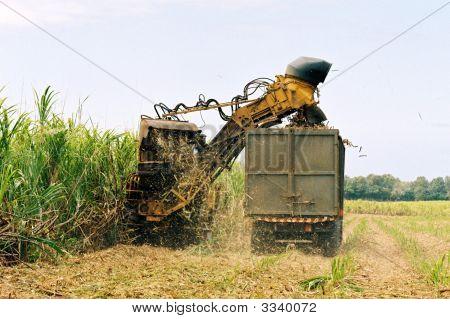 Cane Cutting Machine