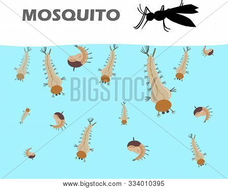 Mosquito Larva Under The Water Before Becoming Adult Are Mosquitoes And Come Up To Live On Land. Mos