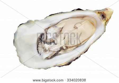 Opened Raw Fresh Oyster Isolated On Whiite