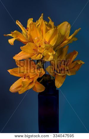 Close-up Of Yellow Lily Flower In Vase On Blue Background.