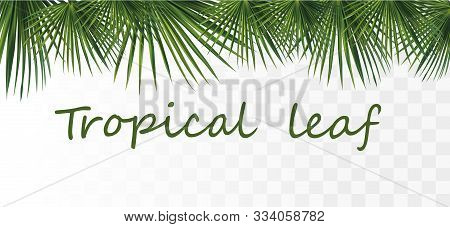 Collection Tropical Exotic Palm Leaf. Tropical Palm Leaves Isolated On Transparent Background. 3d Re