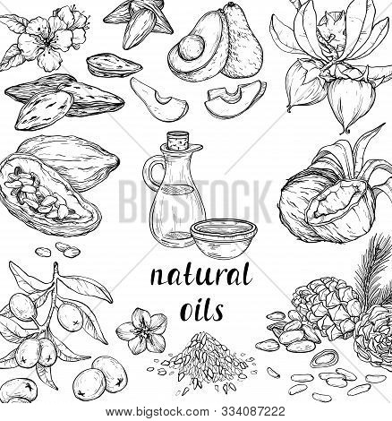 Vector Set Of Cosmetic Care Ingredients. Organic Hand Drawn Oils. Avocado, Cedar, Linseed, Almond, O