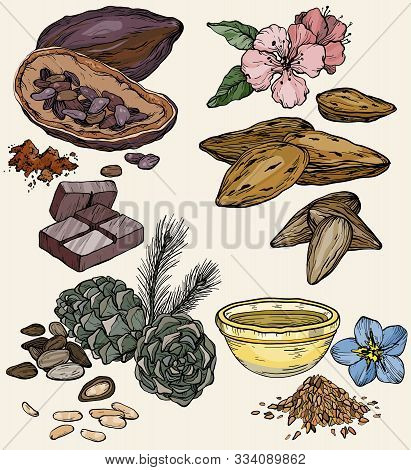 Vector Set Of Food And Cosmetic Care Ingredients. Products For The Production Of Natural Oils. Cedar