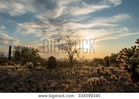 Sunset In The Sonoran Desert With Clouds And Cacti