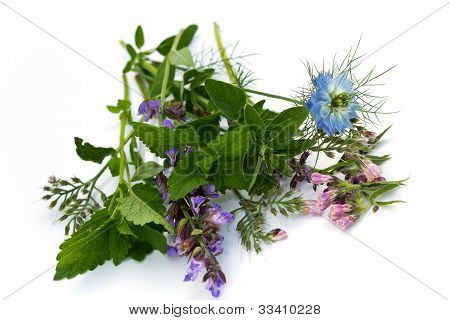 mixed herbs , fennel flower ,thyme ,mint ,borage ,isolated on white