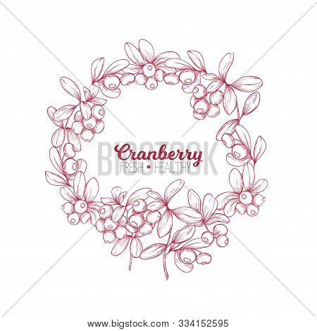 Cranberry. Element For Design. Good For Product Label. Colored Vector Illustration. Graphic Drawing,