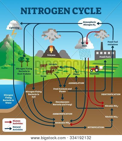 Nitrogen Cycle Vector Illustration. Labeled Educational Natural Chemical Scheme. Graphic With Human