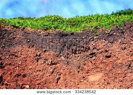 Topsoil Of An Leptosol With Moss, Closeup Of A Soil