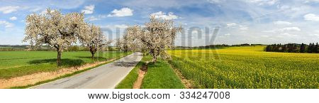 Road And Alley Of Flowering Cherry Trees With Beautiful Sky And Rapeseed Field