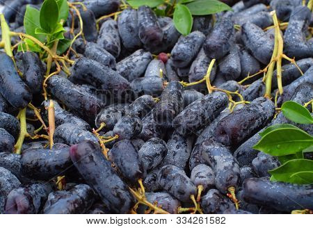 Black Seedless Moon Drops Grape Or Witch Fingers Grapes.  Fresh Fruit Background.