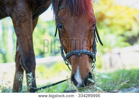 Close Up Side View Of Horse Eating Grass And Hay In Meadow