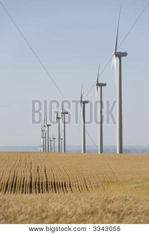 Wind Turbines In Wheat Fields
