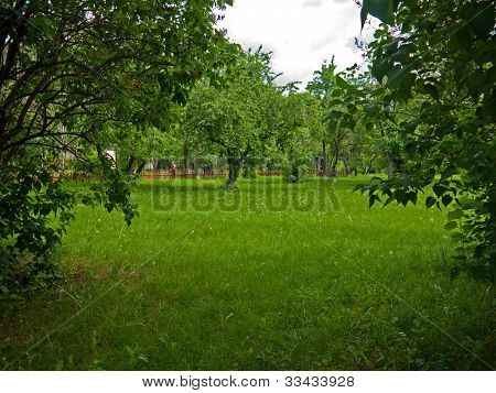 Apple Trees In A Park