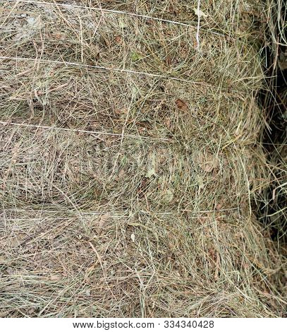 Harvested Bound Hay For Drying.harvested Bound Hay For Drying