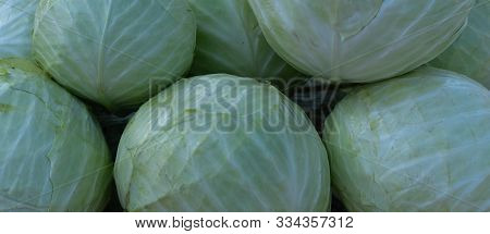 Cabbage As Background And Texture.cabbage As Background And Texture