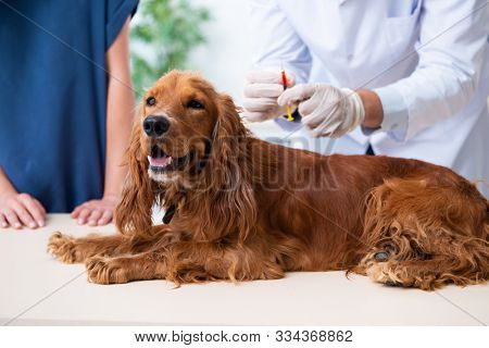 Vet doctor examining golden retriever dog in clinic