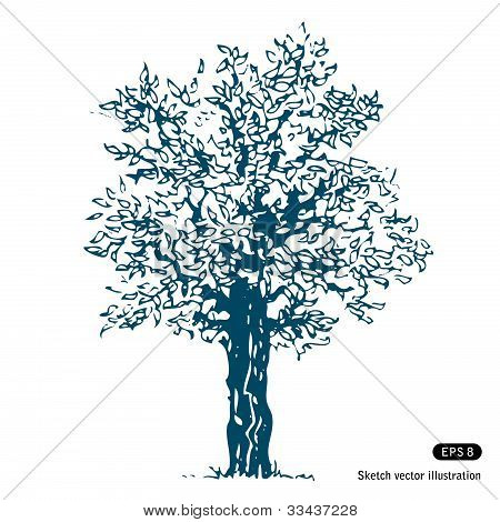 Tree. Isolated