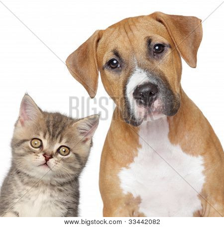 Kitten And Puppy. Close Up Portrait