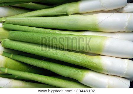 Taiwan puli Water Bamboo