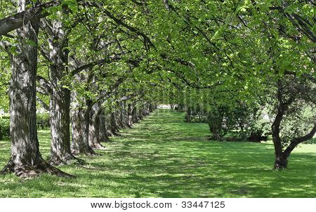 Frodig trädgård gränd