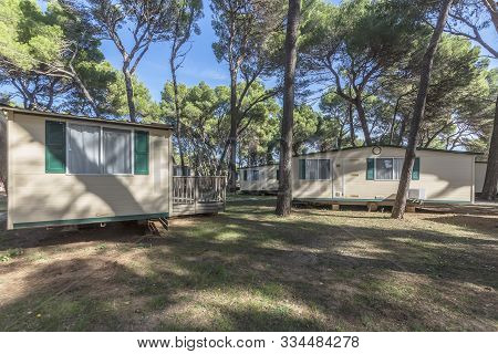 Static Holiday Caravans In Pine Tree Forest