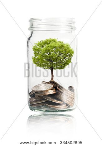 Isolated Of Money Coins And Tree Growing In Jar On White Background. Profit On Deposit In Bank And D