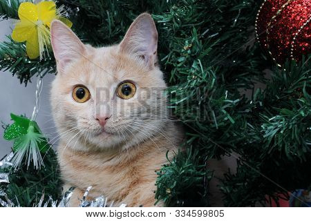 Red Cat On The Christmas Tree . Christmas Pet. Happy New Year.