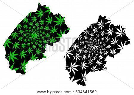 Lviv Oblast (administrative Divisions Of Ukraine, Oblasts Of Ukraine) Map Is Designed Cannabis Leaf