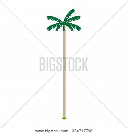 Isolated Cocora Valley Tree Over A White Background - Vector Illustration