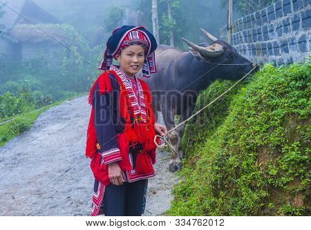 Ha Giang , Vietnam - Sep 14 : Woman From The Red Dao Minority In A Village Near Ha Giang In Vietnam