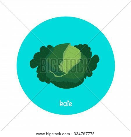 Vector Kale Icon Isolated On White Background.  Flat Blue Circle Icon With Vegetable. Healthy Food.