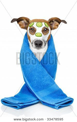 Dog With A Beauty Mask