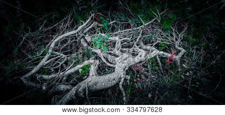 Abstract Spooky Roots In A Deep Dark Transylvania Forest.