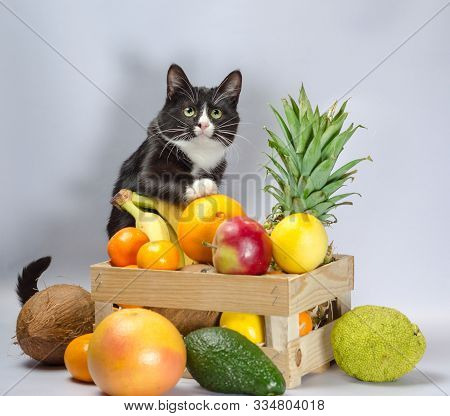 Black And White Cat Guards A Wooden Box With Exotic Fruit