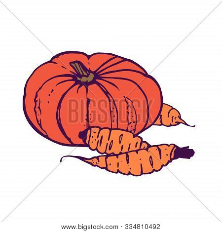 Pumpkin Wuth Three Carrots Illustration. Hand-drawn In Cartoon Style. Colored Artwork Isolated On Wh