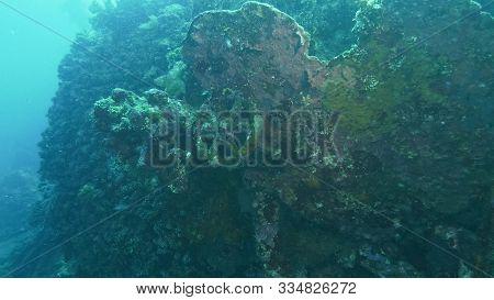 Marine Life Covered Wheel On Liberty Wreck At Tulamben, Bali