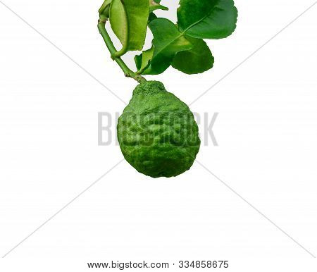 Kaffir Lime, Citrus Hystrix, Makrut Lime Or Mauritius Papeda Fruit Isolated On White And Defocused B
