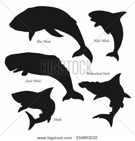 Ocean Big Giants Whales And Shark Silhouette Icons. Vector Sea And Ocean Predators, Blue And Sperm W
