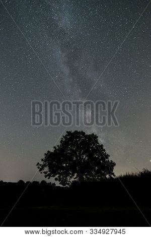 Starry Sky With Tree Silhouette In The Fields, Cornwall, Uk