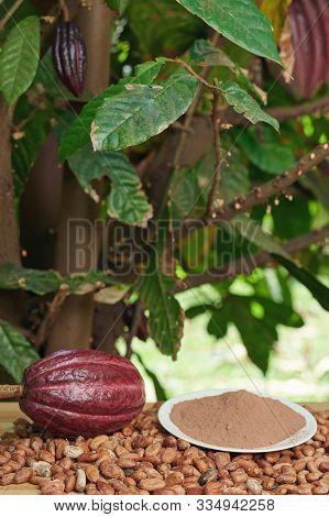 Cacao Farm Background
