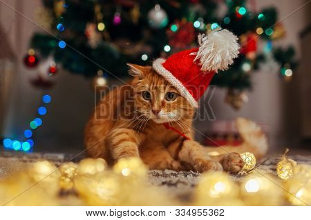 Ginger Cat Wears Santas Hat Under Christmas Tree Playing With Lights. Christmas And New Year Concept