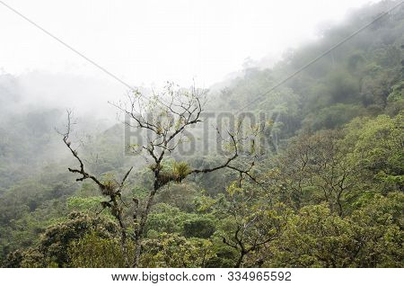 Mountain Slope With Foggy Forest Vegetation, In Cocora Valley, In Quindio, Colombia