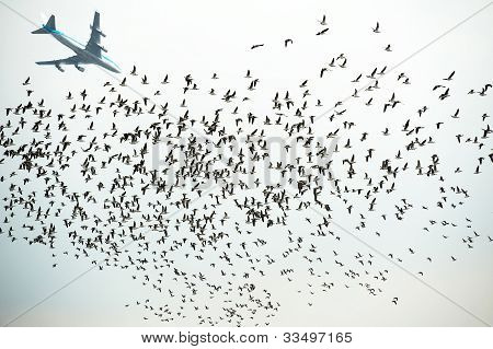 Aircraft flying over flying ducks