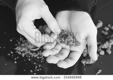 Man Rolling Cannabis Blunt. Close Up Weed Joint With Lighter. Smoke Pot Person. Rolling A Marijuana