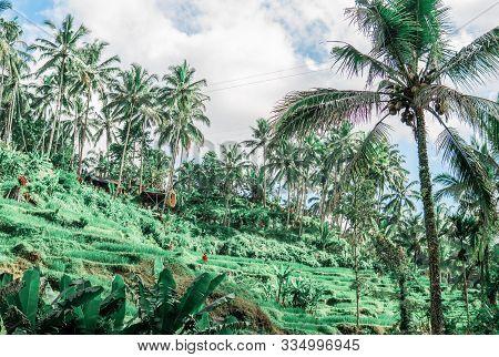 Ubud Of The Island Bali Indonesia In Southeastasia. Tegallalang Near