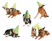 a group of dogs with birthday hats on poster