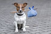 homeless dog holding a bag with a stick poster