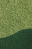 Artificial grass astroturf fake turf synthetic lawn field macro closeup with gentle shaded shadow area green sports texture background with a shade poster